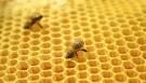 Allahın yaratma sənətinin təcəllisi: arı pətəyi