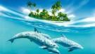 Bir-birinə yardım edən fədakar delfinlər