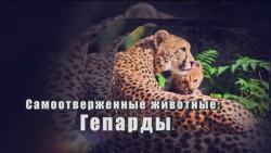 Самоотверженные животные: Гепарды