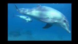Təbiətdəki texnologiya - Delfinlər