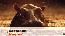 """Begemotların """"günəş kremi"""""""