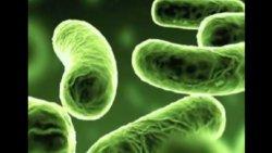 Bakteriyalarda antibiotiklərə qarşı müqavimət