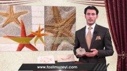 Savalan Məmmədli - Yaşayan fosillər - Dəniz ulduzu fosili