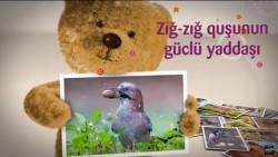 Zığ-zığ quşunun güclü yaddaşı (uşaqlar üçün)